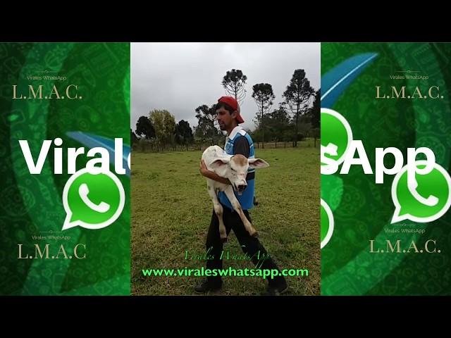 COMPILADO Ń152:Virales WhatsApp:2018