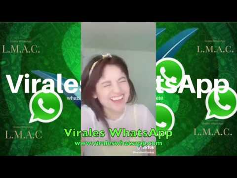 COMPILADO Ń16:Virales WhatsApp:2019