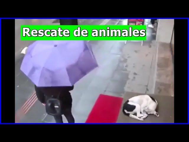 Rescate de animales # 10