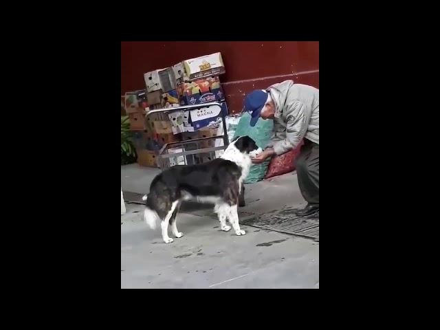 Rescate de Animales # 5