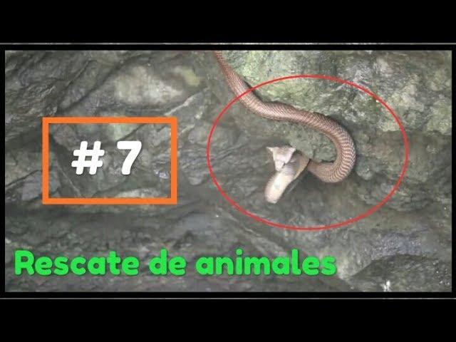 Rescate de animales # 7