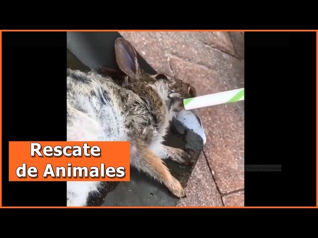 Rescate de animales # 9