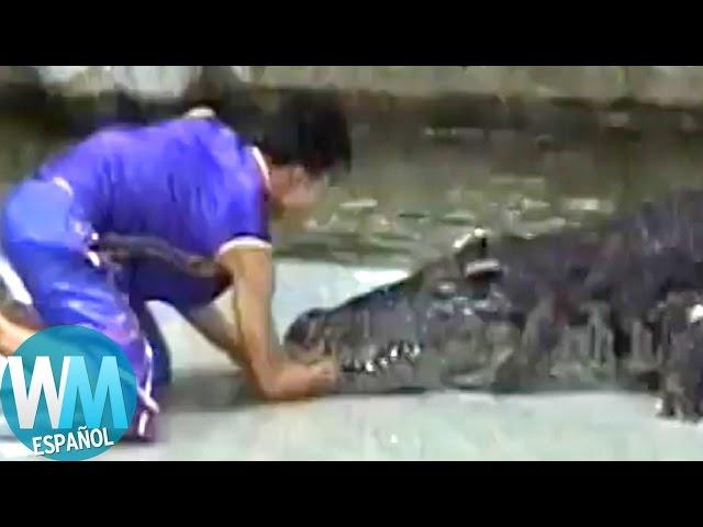 ¡Top 10 Impresionantes Ataques de Animales en Humanos!