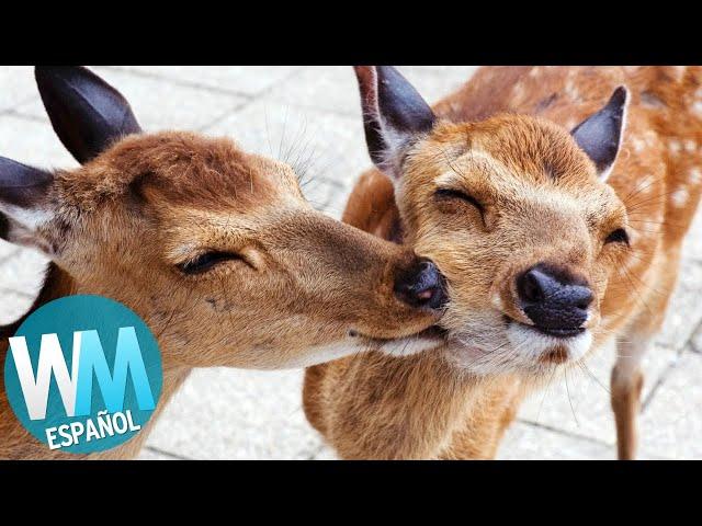 ¡Top 10 Maneras en las que los ANIMALES se CUIDAN ENTRE SI!