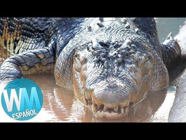 ¡Top 10 Reptiles y Serpientes MÁS GRANDES!