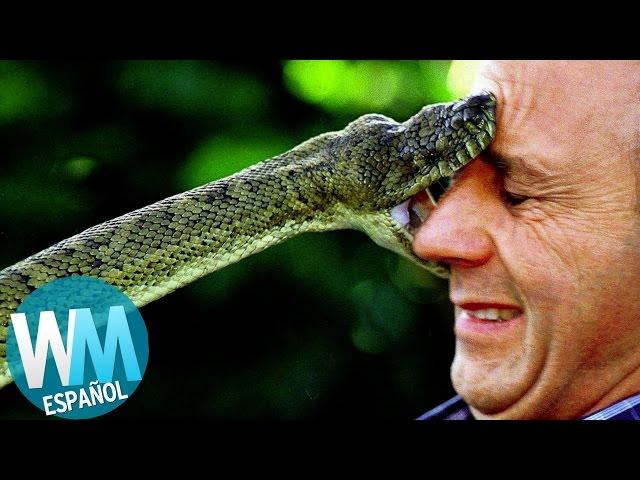 ¡Top 10 Serpientes Más PELIGROSAS del Mundo!