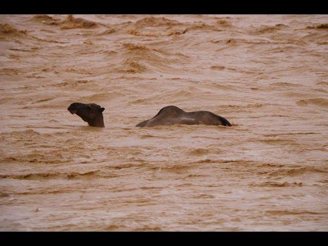 Videos de Desastres Naturales 8 Inundaciones Repentinas, Crecida de Rios