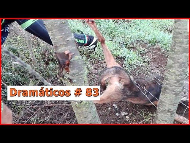 Videos Dramáticos # 83