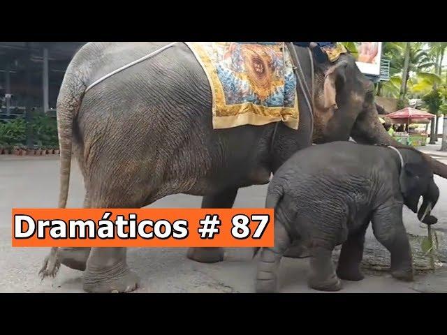 Videos Dramáticos # 87