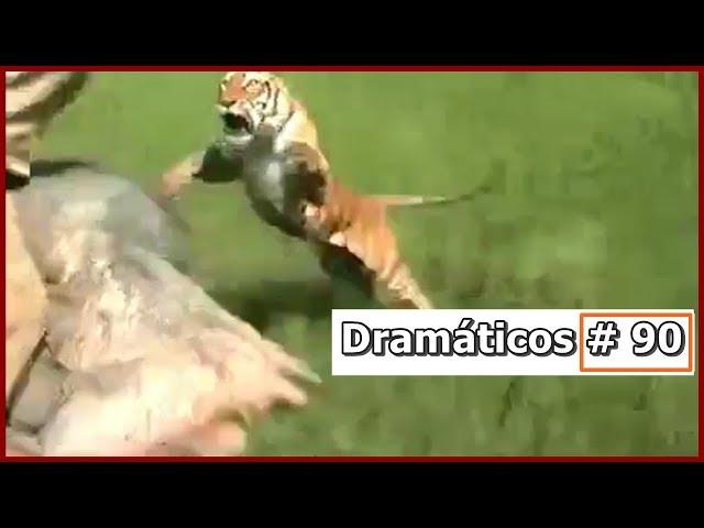 Videos Dramáticos # 91