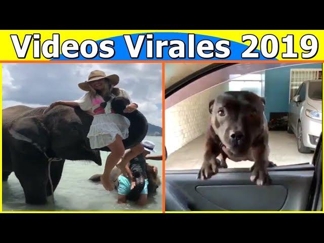 Videos Virales 2019 Agosto # 1