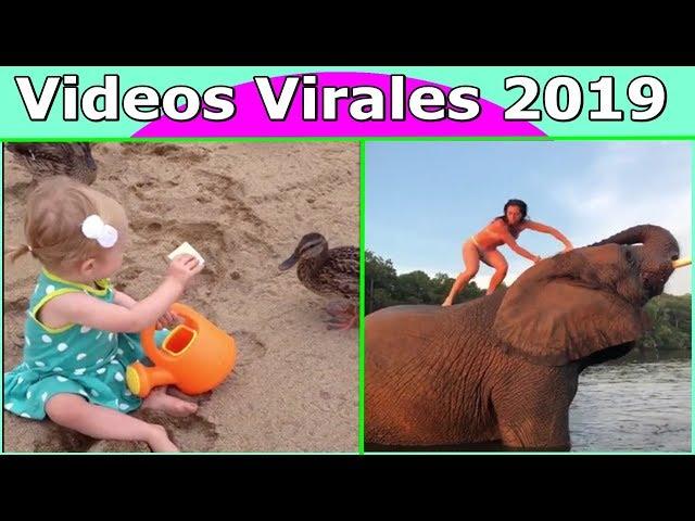 Videos Virales 2019 Septiembre # 4