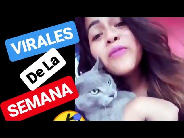 VIDEO VIRALES de Facebook y Tiktok – virales de la semana