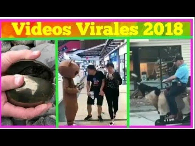Videos Virales 2018 Agosto # 9