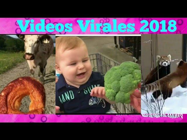 Videos Virales 2018 Agosto # 5