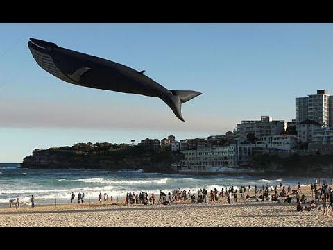 Una Ballena Volando sobre la Playa / Los Videos mas Raros del Mundo 205
