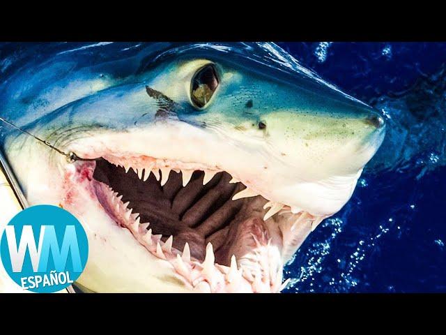 ¡Top 10 Especies de TIBURÓN Más Temibles!
