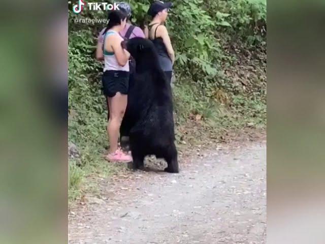 cuando haces ejercicio y de repente sale un oso a saludarte desde la selva!