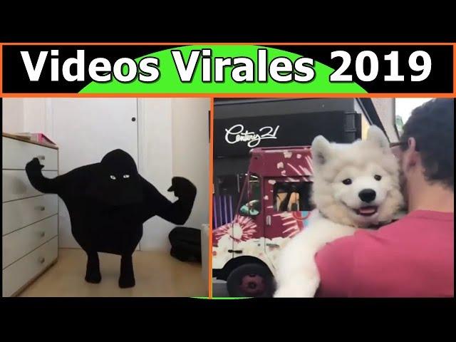Videos Virales 2019 Noviembre