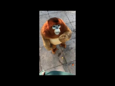 Los Videos mas Raros del Mundo 243 / Videos Sorprendentes