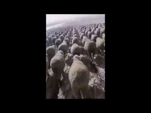 Los Videos mas Raros del Mundo 244 / Videos Increibles